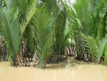 Tributário de Mekong River, Vietnam Fotografia de Stock
