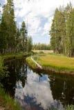 Tributario en bosque escénico foto de archivo libre de regalías