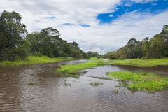 Tributary river of the Amazon Royalty Free Stock Photography