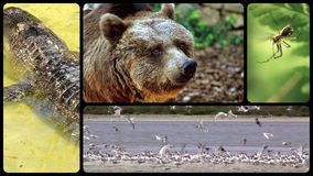 Tribute to wild animals. Composition of different species of wild animals stock video footage