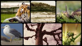Tributo de la fauna, montaje almacen de video