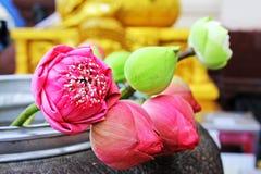 Tributo de la flor para el Buda en el templo imágenes de archivo libres de regalías