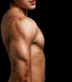 Triceps e spalla dell'uomo con l'ente muscolare di misura Fotografia Stock Libera da Diritti