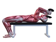 Triceps workout. 3d rendered anatomy illustration of a male body with muscles Royalty Free Stock Photography