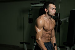 Triceps Workout Stock Image