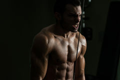 Triceps Workout Stock Photo