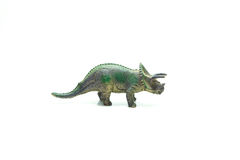 Triceratop Стоковое Фото