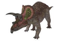 Triceratopo isolato Fotografia Stock