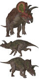 Triceratops Stock Photo