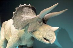 Triceratops imagem de stock royalty free
