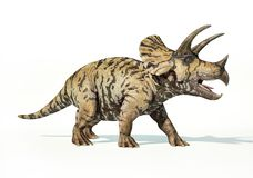 Triceratops 3d rendering On white background royalty free illustration