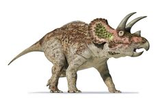 Triceratops 3d rendering On white background stock photography