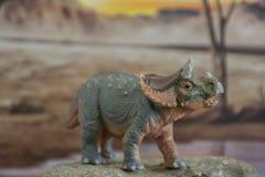 Triceratops del bebé en fondo jurásico foto de archivo