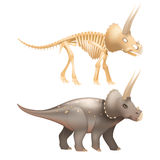 Triceratops dinosaur art with skeleton Stock Photos