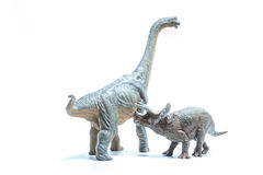 Triceratops Dinosaur attacks a green Brachiosaurus altithorax Stock Photography