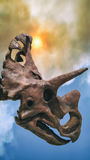 Triceratops Dinosaur Fossil Skull Extinction Event. A triceratops dinosaur fossil skull against a background of smoke and sun, extinction event Royalty Free Stock Photos