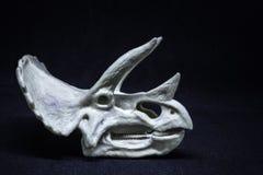 Triceratops Dinosaur head skull model on black background royalty free stock photos