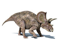 Triceratops dinosaur, isolated at white background, with clipping path. Stock Image