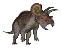 Triceratops dinosaur standing up - 3D render Royalty Free Stock Photos