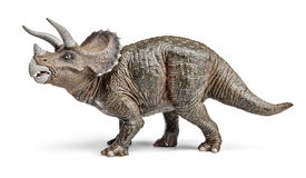 Triceratops dinosaurs toy with clipping path. Triceratops dinosaurs toy isolated on white background with clipping path Stock Photography