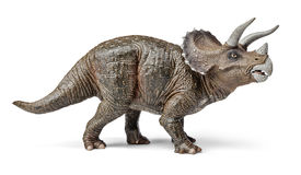 Triceratops dinosaurs toy with clipping path. Triceratops dinosaurs toy isolated on white background with clipping path Royalty Free Stock Images