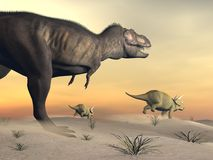 Triceratops escaping from tyrannosaurus- 3D render. One triceratops escaping from tyrannosaurus dinosaur in desertic landscape by sunset Stock Photography