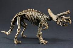 Triceratops fossil dinosaur skeleton model toy. On black background Royalty Free Stock Photography