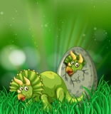 Triceratops hatching egg in the forest Royalty Free Stock Photos