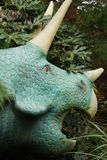 Triceratops. Large horned armoured extinct prehistoric dinosaur Stock Image