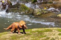 Triceratops odprowadzenie na starej skale z wodą w tle zdjęcia stock