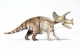 Triceratops que morphing da pele ao esqueleto ilustração royalty free