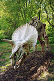 Triceratops skeleton. Dinosaurus.Sculpture in live size.Dinopark Vyškov,Czech republic Stock Photo