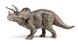 Triceratopsdinosaurier leker med den snabba banan Arkivbild