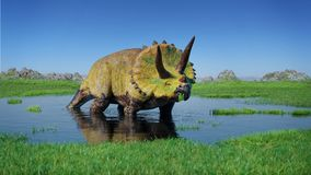 Triceratopshorridusdinosaurie från den Jurassic eran som äter vattenväxter royaltyfria foton