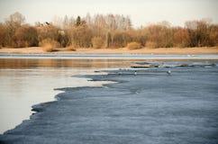 Trichez sur la glace de la rivière qui dégèle Photo libre de droits
