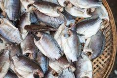 Trichogaster-Pectoralis, trockene Fische Stockbilder