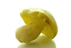 Tricholoma flavovirens. Mushroom on white Stock Image