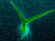 Trichome, τρίχα φύλλων Arabidopsis Στοκ φωτογραφίες με δικαίωμα ελεύθερης χρήσης