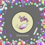 Trichomonas hominis- parasitic microscope Stock Photos