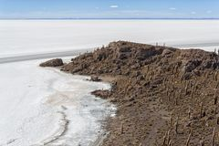 Trichoreceus Cactus on Isla Incahuasi Isla del Pescado  in the middle of the world`s biggest salt plain Salar de Uyuni, Bolivia Royalty Free Stock Photos