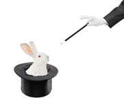 Trick. A view of a rabbit in a hat isolated on white background Royalty Free Stock Photography