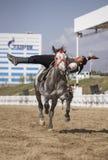 Trick des jungen Mannes, der ein Pferd reitet stockbild