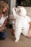 Trick för parundervisninghund arkivbild