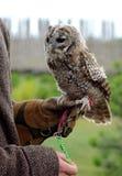 Trick med örn-owlen Royaltyfria Bilder