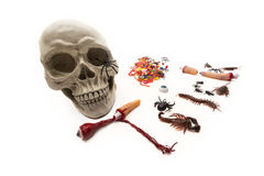 Trick or Treat candy and bugs with skull on white Royalty Free Stock Photo