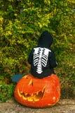 Child sitting on a huge Halloween pumpkin Jack O'Lantern Stock Photography
