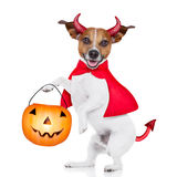 Trick or treat dog Stock Image