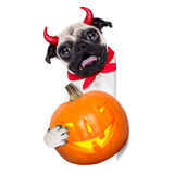 Trick or treat dog Royalty Free Stock Photography