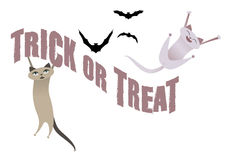 Trick or Treat. Funny cats having fun on Halloween time. Bats in the background Stock Image