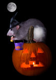 Trick or treat rat Royalty Free Stock Image